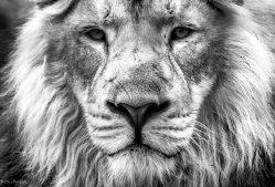 Majestic Look