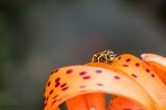 Furious Wasp